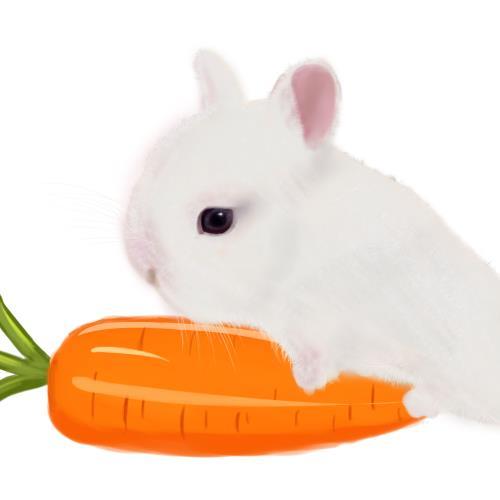 呆萌可爱小兔子夏日清凉短袖